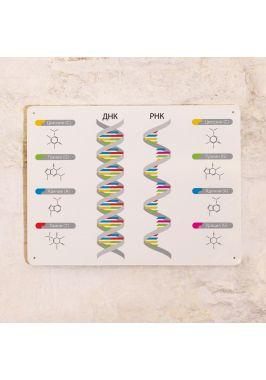 Табличка ДНК/РНК