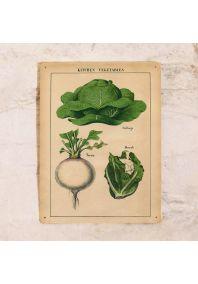 Жестяная табличка Овощи