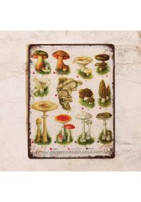 Табличка Все грибы 2