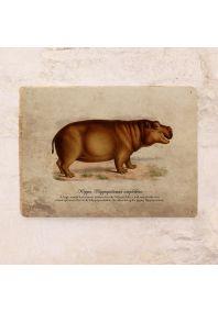 Винтажная табличка Бегемот