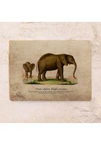 Винтажная табличка Слон