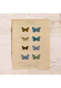 Коллаж Бабочки