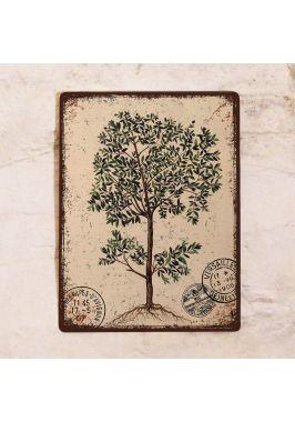 Табличка  Оливковое дерево