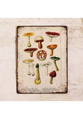 Тематическая табличка Ядовитые грибы