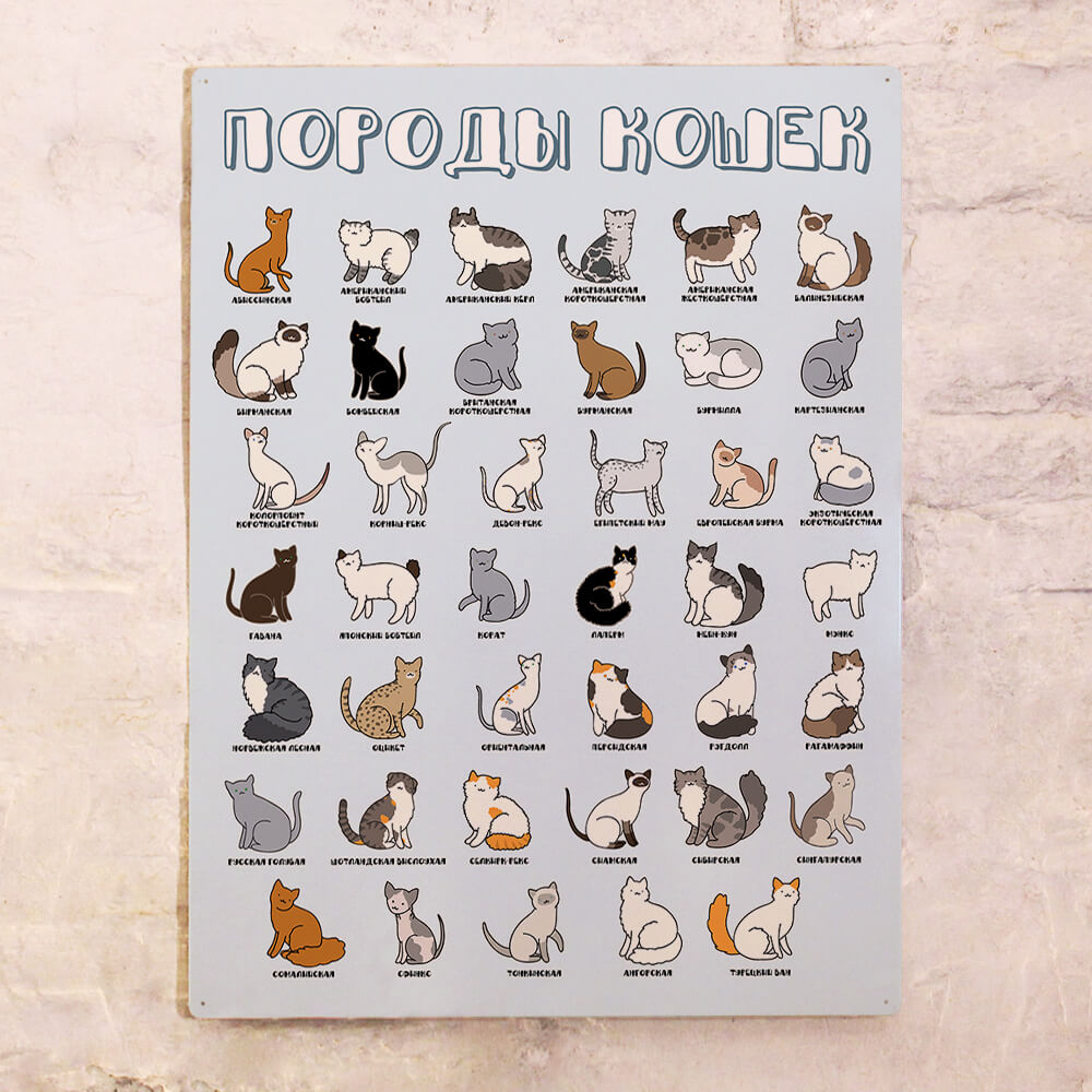 постер с породами кошек
