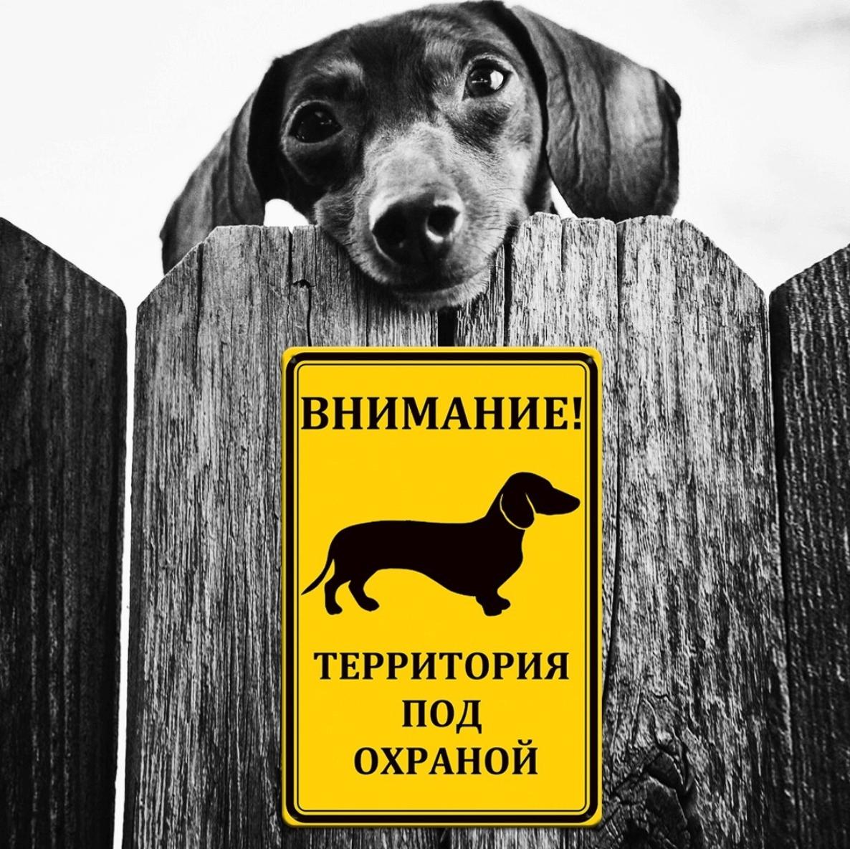 Табличка злая собака такса